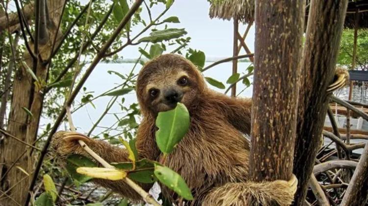 Sloth Poo Dance
